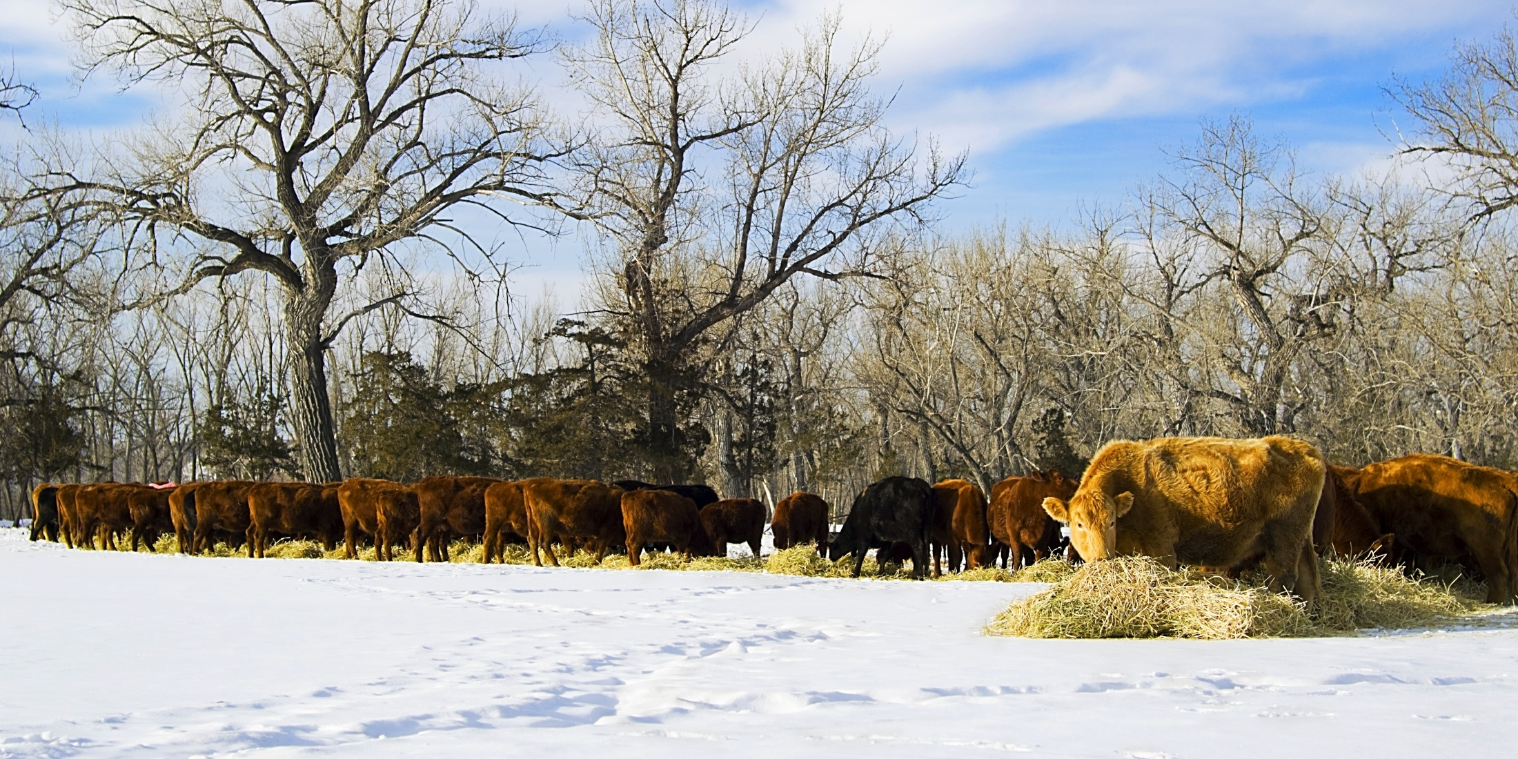 cattle feeding guide-240872-edited.jpg