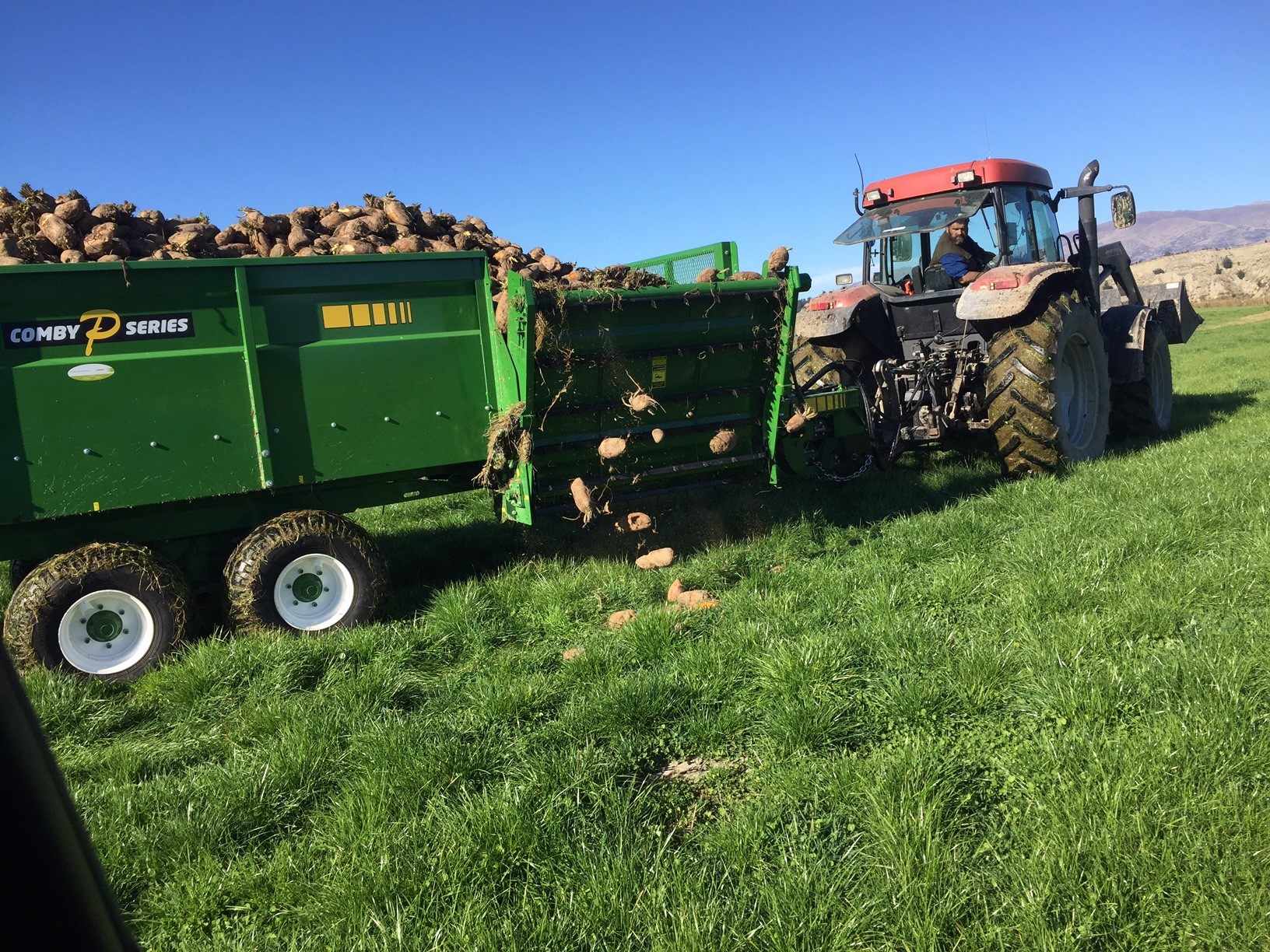 Comby PR Feeding out a load of Fodder beet.jpg